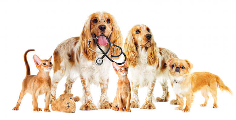 pets with stethoscope
